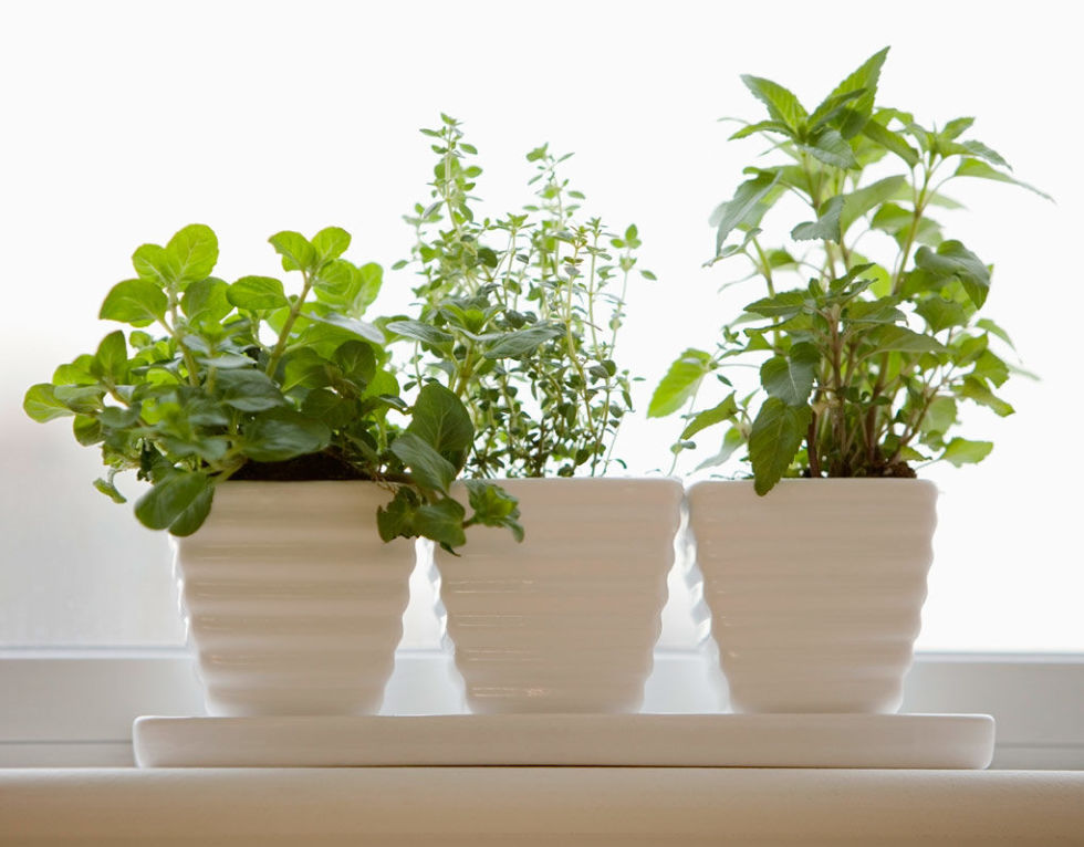 Nature tends to disappear during winter, and it can be rough to go without seeing some green leaves for months on end. Finding some low maintenance house plants to keep around your space can help hold you over until spring. Succulents are always an easy option for those lacking a green thumb.