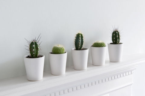10 Best Indoor Plants For Apartments Low Maintenance