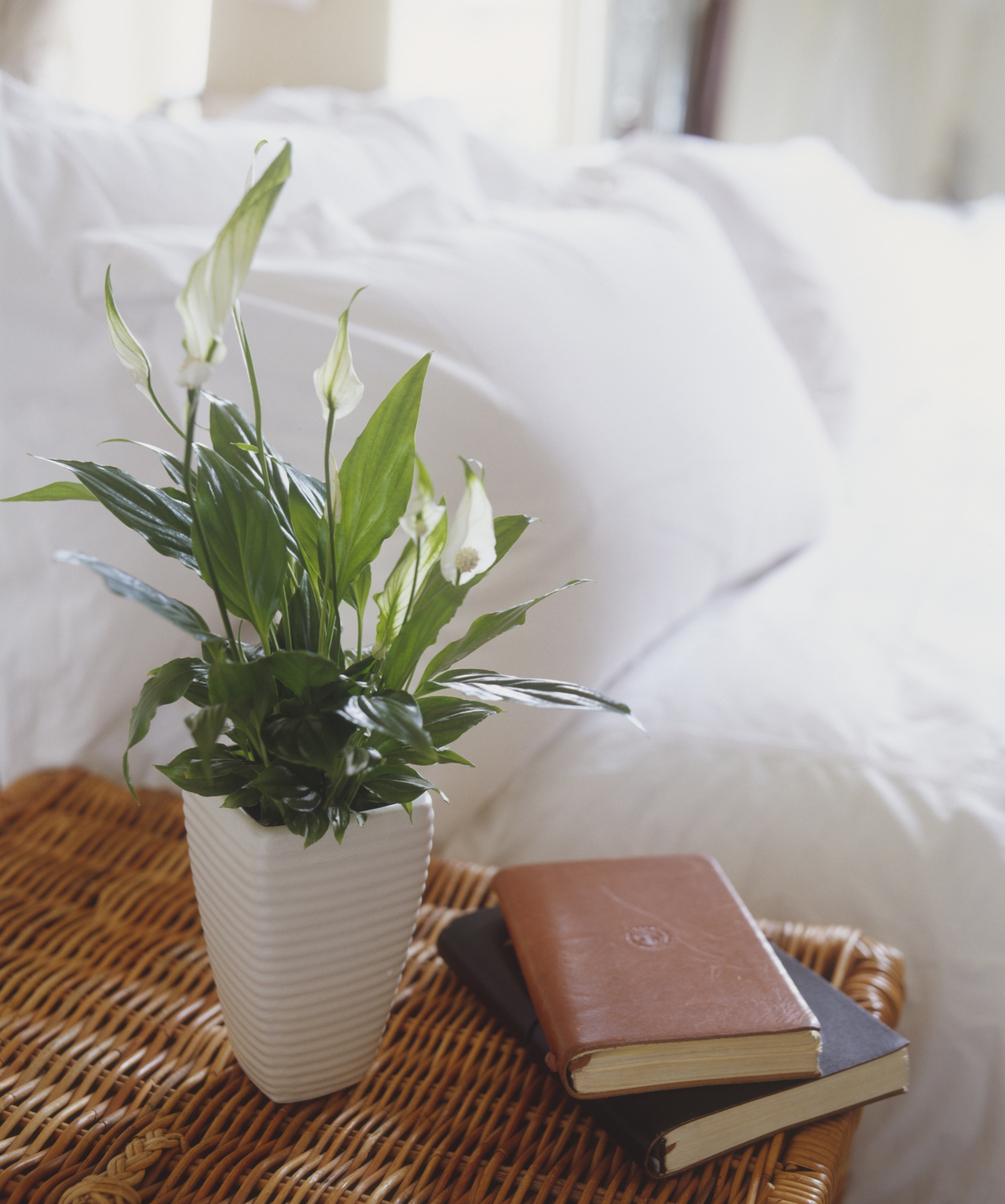 10 Best Indoor Plants For Apartments Low Maintenance