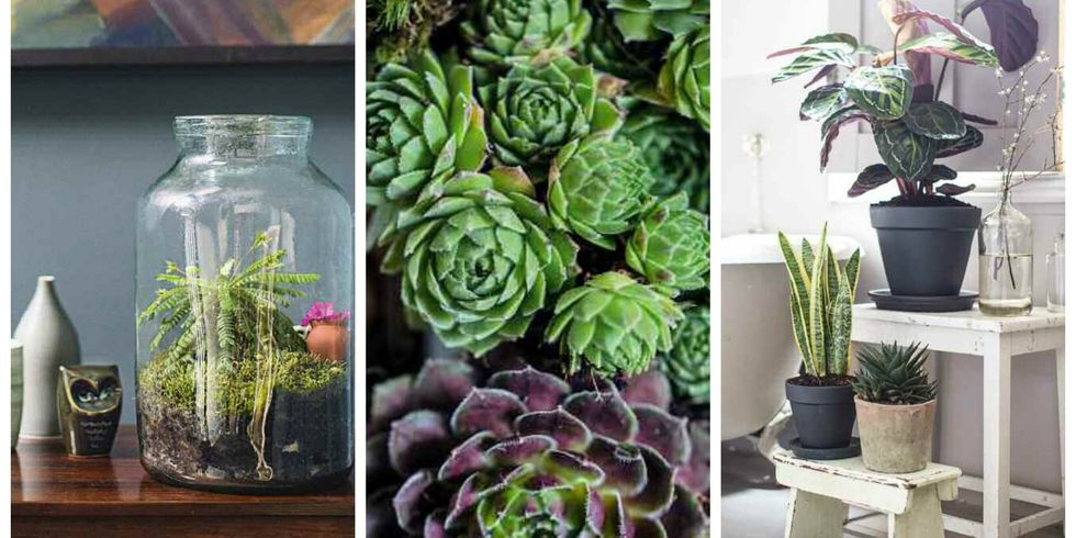 the best small house plants arts